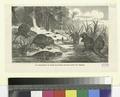Les myopotames du Jardin-des-Plantes (nouveau genre de rongeurs) (NYPL b14504919-1147701).tiff