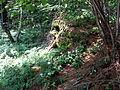 Les v kopci nad Úsobím (2).jpg