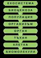 Levels of Bioorganization.png