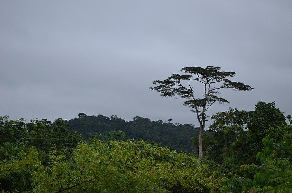 Liberia, Africa 2012 - panoramio (14)