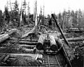 Loading logs on railroad car with a gin pole, A F Coats Logging Co camp, Grays Harbor region (CURTIS 1763).jpeg