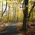 Loantaka Way NJ bike trail through woods early autumn 2.JPG