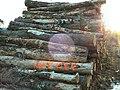 Logs in the sun - geograph.org.uk - 440851.jpg