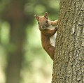 Looking from a tree (35169914521).jpg