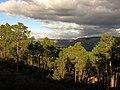 Los bosques de pinos de Avila (23609637545).jpg