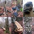 Lots of Fomes fomentarius (Tinder fungus or Ice man fungus, D= Zunderschwamm, F= Amadouvier, NL= Echte tonderzwam) at Rozendaal forest - panoramio.jpg