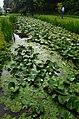 Lotus park - panoramio (1).jpg