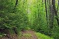 Lower Jerry Run Natural Area (16) (18127706980).jpg