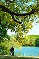 Lyon - Parc de la Tête d'Or - promenade au bord du lac.jpg