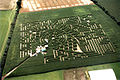 Maislabyrinth in Delingsdorf 2.jpg