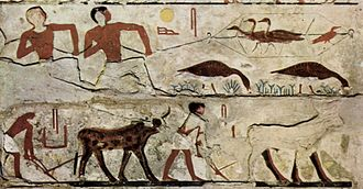 Ancient Egyptian cuisine - Hunting game birds and plowing a field. Depiction on a burial chamber from c. 2700 BC. Tomb of Nefermaat I and his wife Itet.