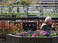 Man on Bench outside Empress Hotel - Victoria - BC - Canada (16230229453) (2).jpg