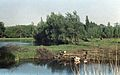 Markivci-Lake-1970s-2.jpg