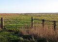 Marsh pasture grazed by sheep - geograph.org.uk - 1083364.jpg