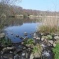 Massapequa Creek 2021 (2) jeh.jpg