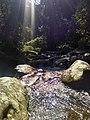 Mata ciliar - Floresta protetora 3.jpg