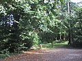 Mature Woodland in Stover Country Park - geograph.org.uk - 991048.jpg
