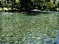 McKenzie River.jpg