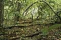 Mežs - panoramio (9).jpg