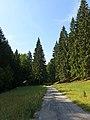 Medzihorská dolina - panoramio (5).jpg