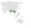Megalurus palustris distribution map.png