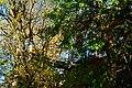 Mercer Slough Nature Park 03.jpg