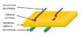 Microfibrilles de cellulose légendé.png