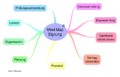 Mind-Map Eignung.png
