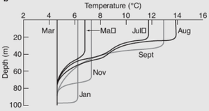 Mixed layer - Depth of Mixed Layer versus temperature, along with relationship to different months of the year