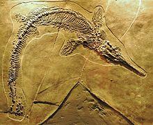 Px Mixosaurus Cornalianus Besano