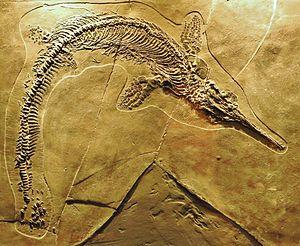 Mixosaurus - M. cornalianus