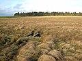 Moorland near Stowerhill - geograph.org.uk - 671233.jpg