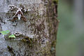 Moth on a tree trunk (14349142423).jpg