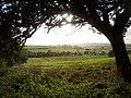 Motorway and Fields - geograph.org.uk - 60608.jpg