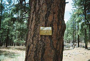 Mount Logan Wilderness -  Wilderness sign in the Mt. Logan Wilderness