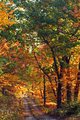 Mountain-autumn-country-road - West Virginia - ForestWander.png