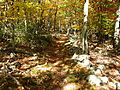 Mountain-forest-trail-autumn - West Virginia - ForestWander.jpg
