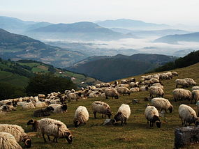 Mountain view with sheep.jpg