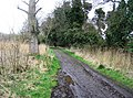 Muddy track - southern boundary of Fowlmere - geograph.org.uk - 756624.jpg