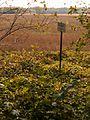 Muistne asulakoht. Lääne-Nigula vald Uugla.jpg