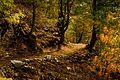 Mukhspuri Hiking Trail.jpg