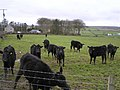 Mulkeeragh Townland - geograph.org.uk - 716674.jpg