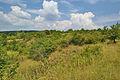 Národní přírodní památka Růžičkův lom, Čelechovice na Hané, okres Prostějov.jpg