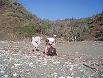 NEGB and PSU 313 Conduct Beach Cleanup DVIDS84580.jpg