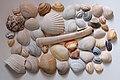 NIND shells ISO200.jpg
