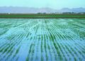 NRCSAZ02076 - Arizona (435)(NRCS Photo Gallery).tif