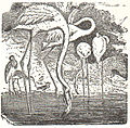 NSRW Flamingo.jpg