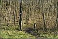Nagykálló, 4320 Hungary - panoramio (9).jpg