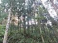 Nakatsugi, Murakami, Niigata Prefecture 959-3918, Japan - panoramio (3).jpg