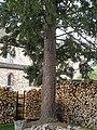 Naturdenkmal Landkreis Kassel 6.33.831 2017-05-07 d.JPG